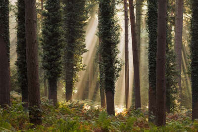 Romantik Bilder: New Forest Trees von David Baker