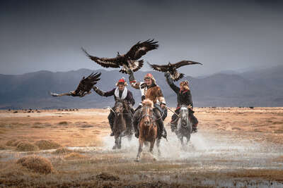 wall art wildlife prints animals  Mongolia Eagle Hunters by Daniel Kordan