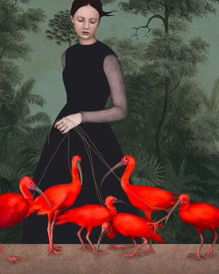 wall art wildlife prints animals  The Lady of the Ibis by Daria Petrilli