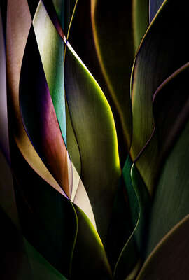 living room art themes: Cactus Abstraction 04 by Ed Freeman