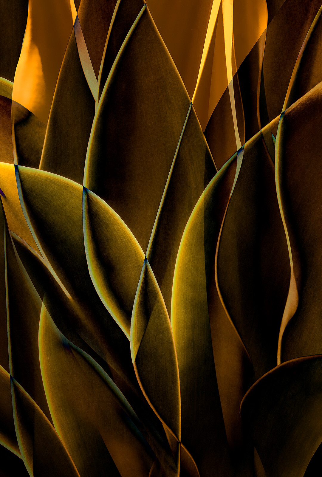 Cactus Abstraction 01 von Ed Freeman