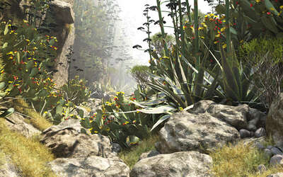 curated cactus artworks: Barranco del Fuente 57 by Gerhard Mantz