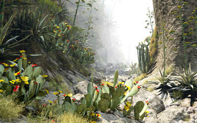 curated cactus artworks: Barranco del Arena 37 by Gerhard Mantz