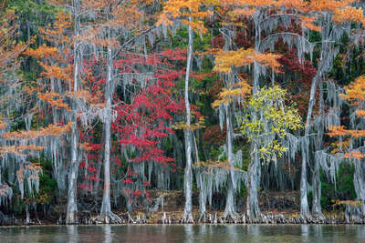 water art photography:  The Big Cypress Bayou by Georg Popp