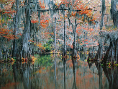 LUMAS Bedroom Wall Art: The Secret Cypress Swamp by Georg Popp