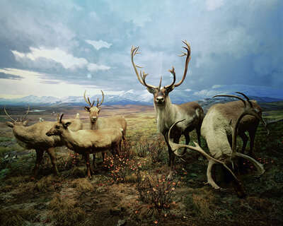 wall art wildlife prints animals  Diorama #4 by Henning Bock