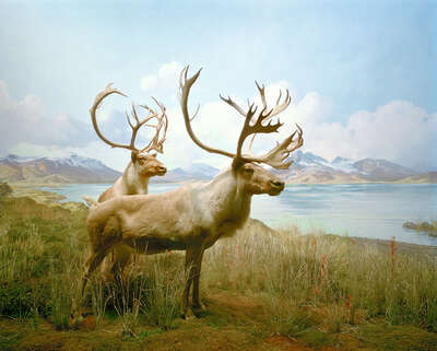 wall art wildlife prints animals  Diorama #10 by Henning Bock