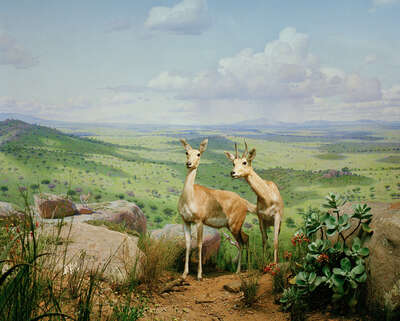 wall art wildlife prints animals  Diorama #11 by Henning Bock
