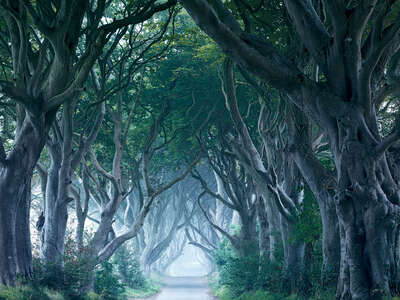 Landscape Wall Art: Dark Hedges by Horst & Daniel Zielske