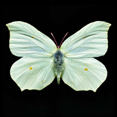 Curated selection of living room artworks: Butterfly V by Heiko Hellwig