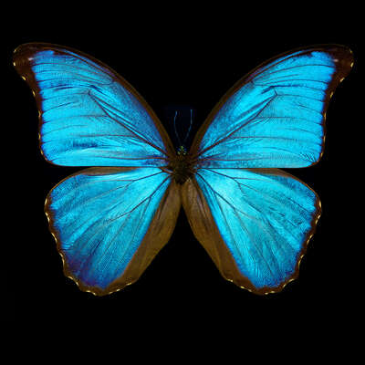 bedroom wall art: Butterfly III by Heiko Hellwig