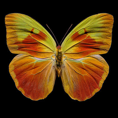 Curated abstract yellow artworks: Butterfly  XI by Heiko Hellwig