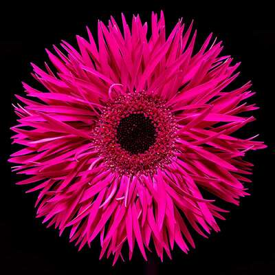 Flower Art Prints: Most Popular LUMAS Prints Blossom III by Heiko Hellwig