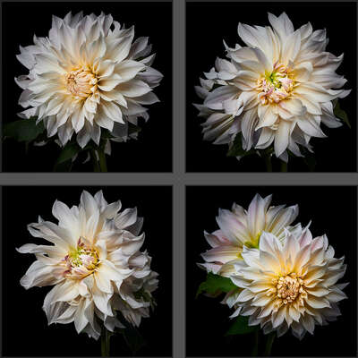 Wall Art: Dahlia Grid White by Heiko Hellwig