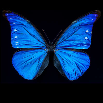 Curated blue nature artworks: Butterfly XII by Heiko Hellwig