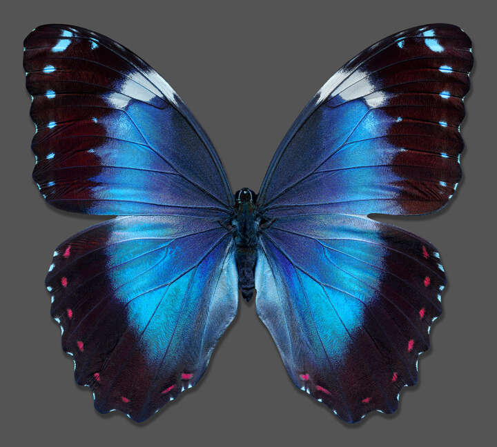Butterfly XIV by Heiko Hellwig