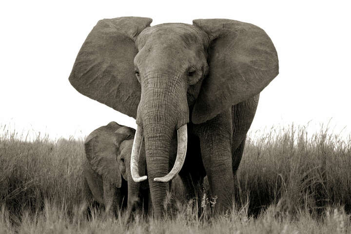 Elephant and baby by Horst Klemm