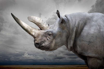 Black Rhino with Sky by Horst Klemm
