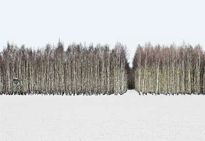 Lumas landscape artwork: Forest 1 by Hartwig Klappert