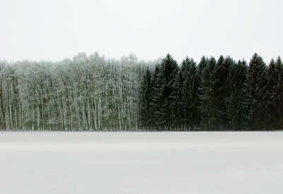 Gifts for Nature Lovers: Forest 2 by Hartwig Klappert