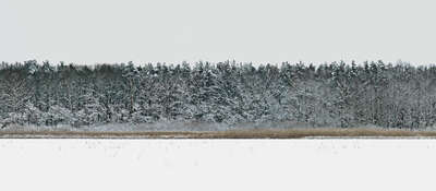 forest photographers: Hertwig Klappert: Forest 4 by Hartwig Klappert