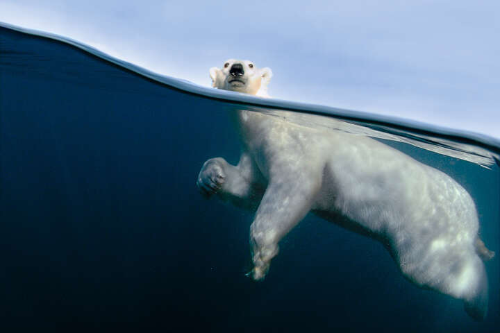 Polar Bear Exercise von Joe Bunni