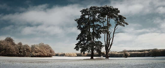 Trees, St Giles Park, Winter View von Justin Barton