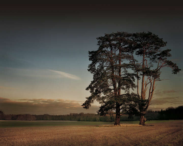 St Giles House Park Trees at Sunset von Justin Barton