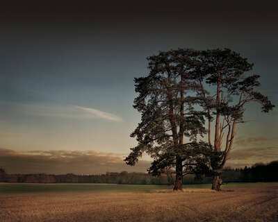 St Giles House Park Trees at Sunset by Justin Barton