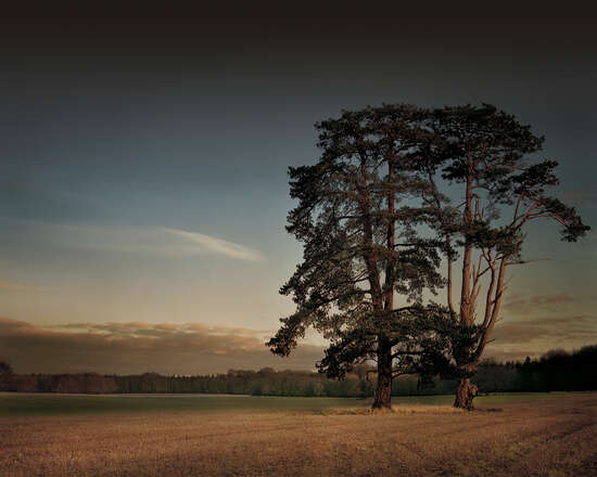St Giles House Park Trees at Sunset