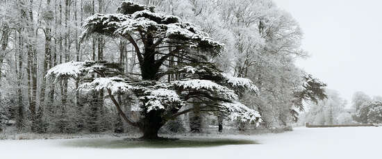 Snow Laden Tree in St Giles House Park von Justin Barton