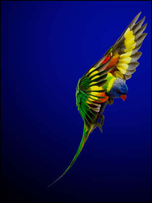 abstract photography:  Rainbow Lorikeet by Juan Fortes