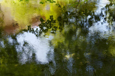 Wald Bilder Enchanted Waters VIII von Juraj Lipscher