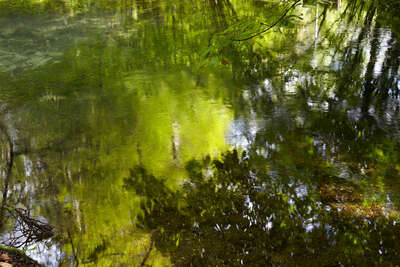 Wald Bilder Enchanted Waters III von Juraj Lipscher