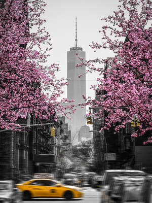 conceptual photography:  New York in Spring by Johannes Weinsheimer