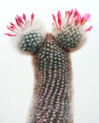 Floral Art Prints: Bestsellers: Cactus No. 94 by Kwangho Lee