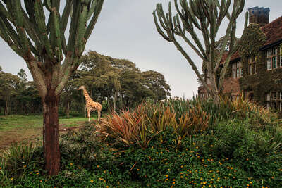 curated cactus artworks: Giraffe Manor #14 by Klaus Thymann
