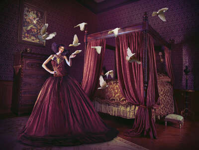 animal wall art:  Dove Tale by Miss Aniela