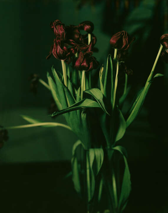Zyklus Fugenthema Tulpe III by Manfred Paul