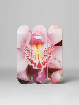 Abstract Flower Art: Orchid by Nobuyoshi Araki