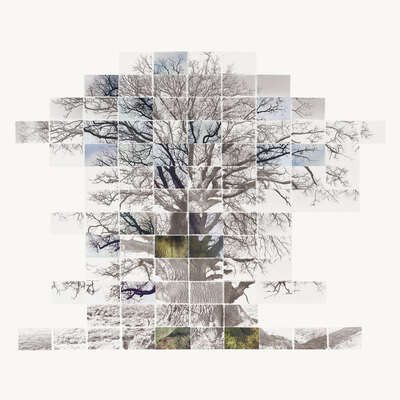 curated collage  artworks: Sketch Film of a Tree by Noel Myles