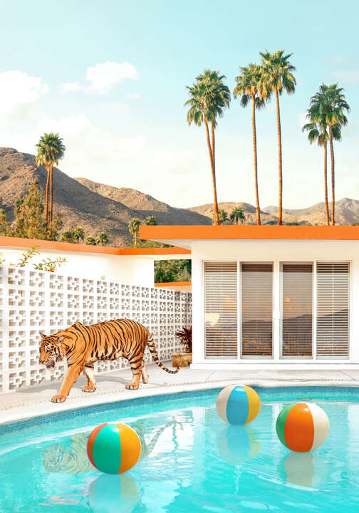 Pool Desert Tiger von Paul Fuentes