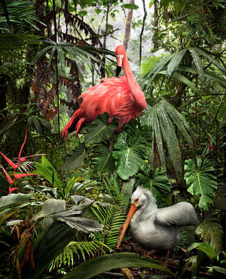 Curated selection of living room artworks: A Lost Flamingo and a Lost Pelican by Pat Swain