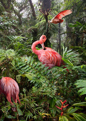 nature wall art: Two Lost Flamingos and a Spoonbill     by Pat Swain