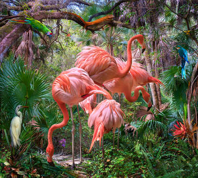 animal wall art:  Lost Flamingos and Some Acquaintances by Pat Swain