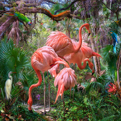 Lost Flamingos and Some Acquaintances von Pat Swain