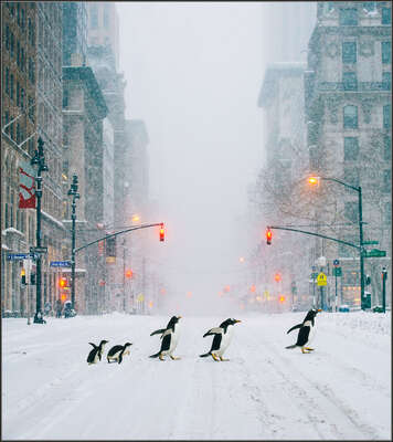 wall art wildlife prints animals  NYC Penguins by Robert Jahns