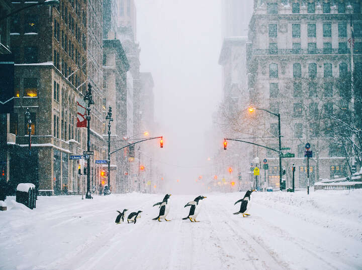 NYC Penguins - Part II de Robert Jahns