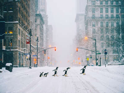animal wall art:  NYC Penguins - Part II by Robert Jahns