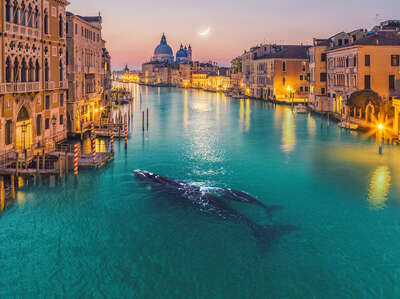 wall art wildlife prints animals  Whale in Venice by Robert Jahns